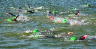 Concurrents nageant dedans à la fin de l'étape de natation au début du triathlon Images stock