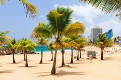 Condado beach San Juan. Beautiful tropical palm trees at popular touristic Condado beach in San Juan, Puerto Rico stock photography