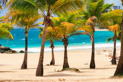 Condado palm beach royalty free stock images