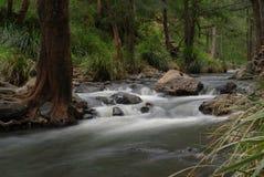 Condamine Fluss QLD Stockfoto