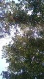 Condeming небо стоковые изображения