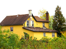 Condemned and abandoned yellow city house. Outside of a yellow stucco condemned and abandoned city house, surrounded by bush and weeds.   against a white Royalty Free Stock Image