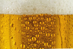Condensed glass of  beer. Condensed glass of beer with beautiful golden color and froth Stock Images