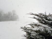 Condiciones de la ventisca del chubasco de la nieve Imagen de archivo