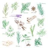 Condimenti della spezia delle icone di vettore o condimenti dell'erba royalty illustrazione gratis