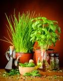 Condimento Mediterraneo Immagini Stock