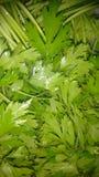 Condimento verde de la salsa Imagen de archivo libre de regalías