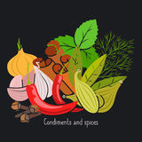 Condiments and spices on dark background. Condiments and spices vector illustration on the dark background Stock Photo