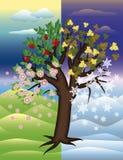 Condisce il fondo decorativo dell'albero Immagini Stock