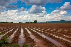 Condition the Plowed field, ready for sowing, After rain. The condition the Plowed field, ready for sowing, After rain Royalty Free Stock Photo