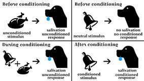Conditioning. Classical conditioning as shown in Pavlovs dog experiment Stock Images