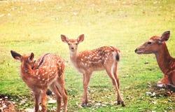 Condizione cara del bambino sulla terra con erba verde ed esaminare macchina fotografica, animale del mammifero sul fondo della n fotografia stock
