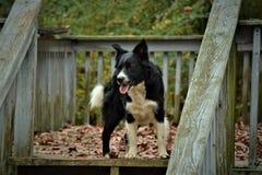 Condizione del cane Fotografie Stock