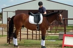 Condizione del cavallo di baia fotografie stock