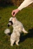 Condizione e cibo del cane Fotografia Stock Libera da Diritti