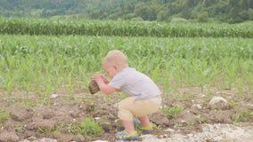 Condizione e funzionamento del bambino del bambino piccolo fra il campo di erba verde del giorno soleggiato del mais o del mais a video d archivio