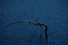 Condizione grigia del segantino nell'acqua increspata blu scuro evidenziata da luce solare immagine stock libera da diritti