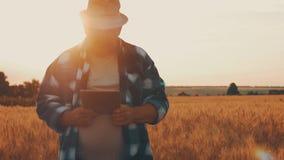 Condizione senior dell'agricoltore in un giacimento di grano con una compressa Agricoltore maschio dell'agronomo con il computer  video d archivio
