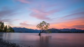 Condizione sola dell'albero nel lago Wanaka, Nuova Zelanda al tramonto fotografia stock libera da diritti