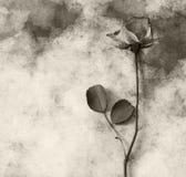 Condolence card - dark rose Royalty Free Stock Image