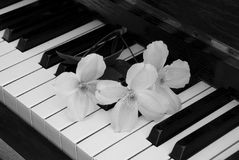 Condolence card - flower on piano Royalty Free Stock Photography