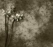 Condolence card - gray flower Stock Photos