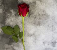 Condolence card - red rose on marble Royalty Free Stock Photography