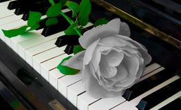 Condolence card - rose on piano Stock Photo