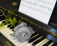 Condolence card - rose on piano Royalty Free Stock Images