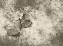 Condolence card - white flower Stock Image