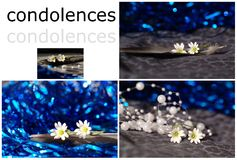 Condolences with white flower Royalty Free Stock Image