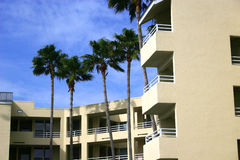 Condominium in Tropics. With tall palm trees against a bright blue sky royalty free stock image