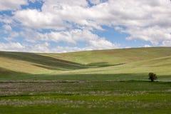 Condon-Hügel stockbild