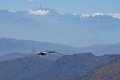 Condor andin photographie stock