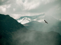 Condor au-dessus de canyon de Colca Image libre de droits