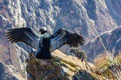 Grootste vliegende vogel ter wereld