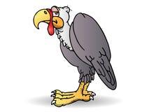 Condor bird Stock Image