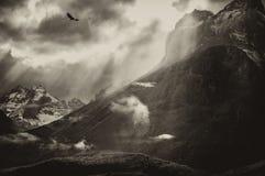 Condor do vôo sobre o Torres Del Paine Montanha Imagens de Stock