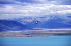 Condor in flight and Andes Mountains near El Calafate, Patagonia, Argentina Royalty Free Stock Photos
