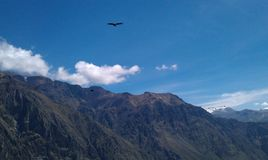 Condor flying above mountains royalty free stock photo