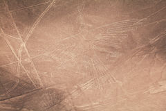 Condor. The Lines and Geoglyphs of Nazca desert, Peru Stock Image