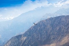 condor soaring above the mountains royalty free stock photo