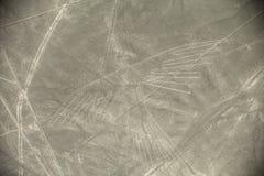 Condor. Unesco Heritage: Lines and Geoglyphs of Nazca, Peru - Condor royalty free stock images