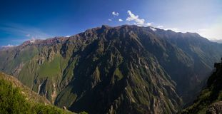Condors above the Colca canyon at Condor Cross or Cruz Del Condor viewpoint, Chivay, Peru royalty free stock photo