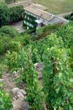 The Condrieu vineyards site Stock Photo
