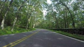 Condução através da floresta na movimentação da skyline video estoque