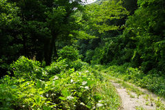 Condução através da floresta profunda Imagens de Stock