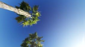Condução através das palmeiras no céu azul filme