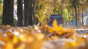 Condução de carro poderosa na estrada do parque sobre as folhas de outono amarelas no dia ensolarado A folhagem de outono colorid video estoque