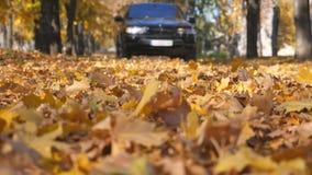Condução de carro poderosa na estrada vazia sobre as folhas de outono caídas amarelas Paisagem outonal bonita Fundo borrado vídeos de arquivo